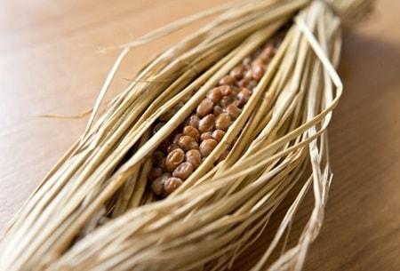 納豆は優れた発酵食品